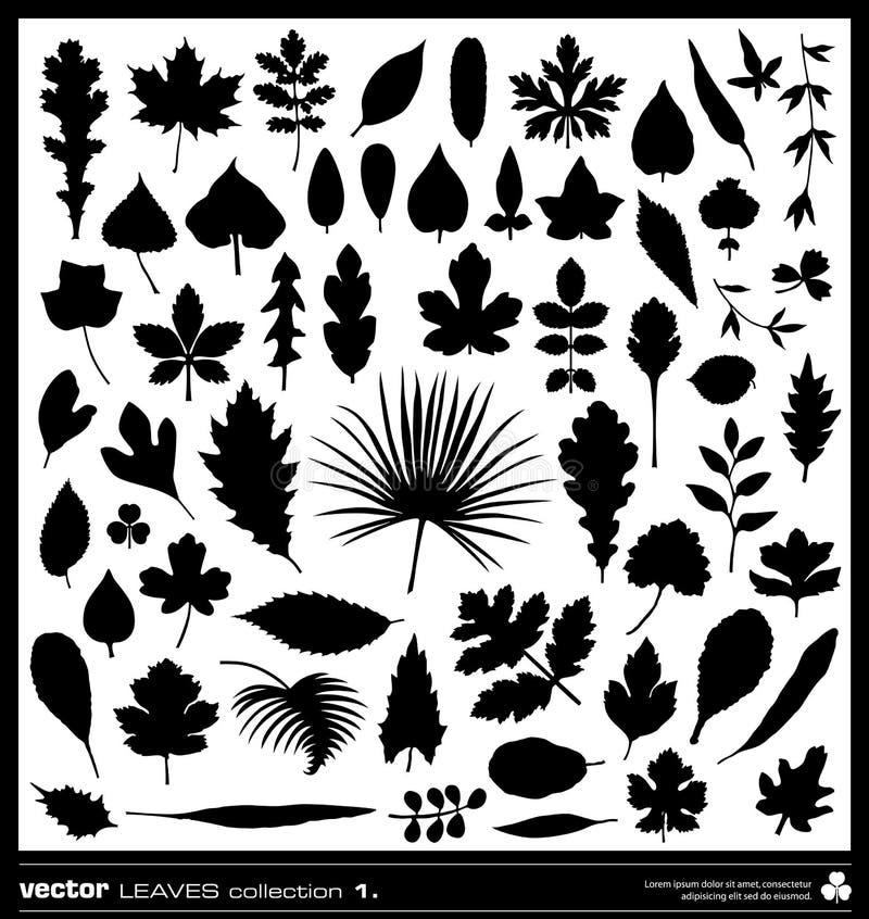 Vetor das silhuetas das folhas ilustração royalty free