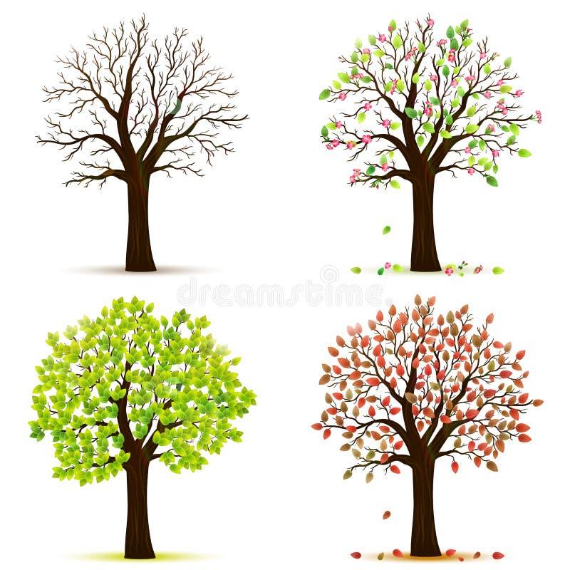Vetor de quatro árvores das estações fotografia de stock royalty free