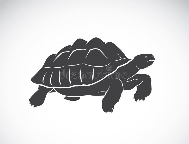 Vetor de uma tartaruga no fundo branco réptil ilustração stock