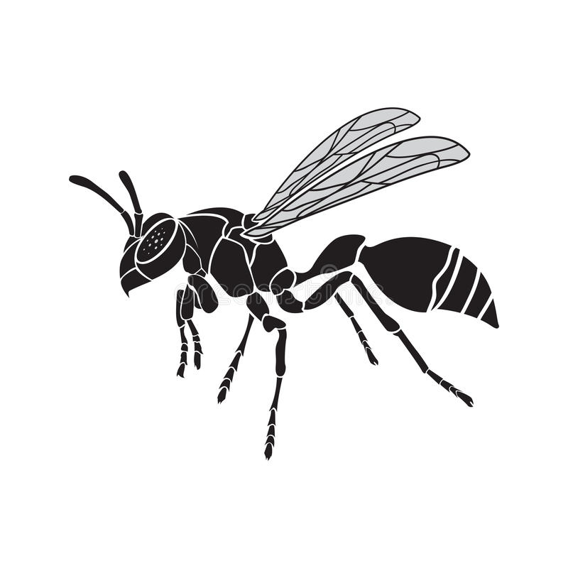 Vetor de uma vespa em um fundo branco inseto ilustração royalty free