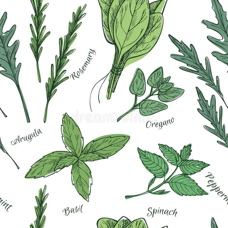 Vetor desenhado mão Teste padrão sem emenda com ervas e especiarias ilustração do vetor