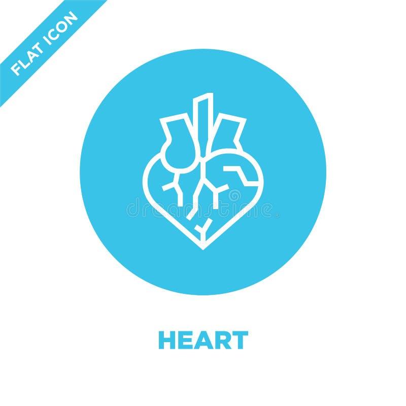 vetor do ícone do coração da coleção dos órgãos humanos Linha fina ilustração do vetor do ícone do esboço do coração Símbolo line ilustração royalty free