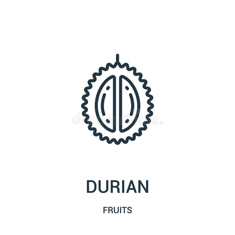 vetor do ícone do durian da coleção dos frutos Linha fina ilustração do vetor do ícone do esboço do durian Símbolo linear para o  ilustração royalty free