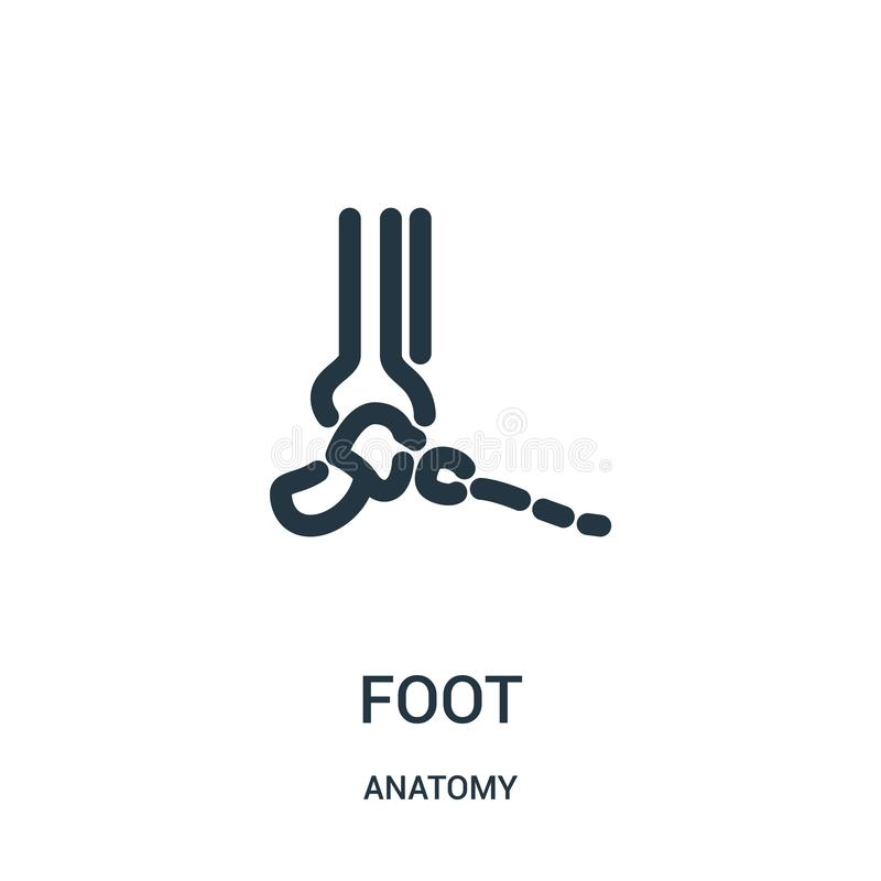 vetor do ícone do pé da coleção da anatomia Linha fina ilustração do vetor do ícone do esboço do pé Símbolo linear para o uso na  ilustração stock