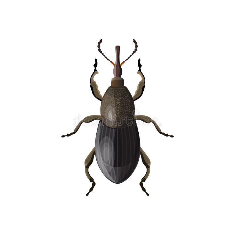 Vetor do besouro da broca ilustração do vetor