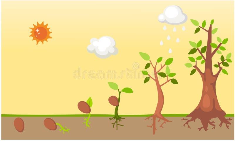 Vetor do ciclo de vida da árvore ilustração do vetor