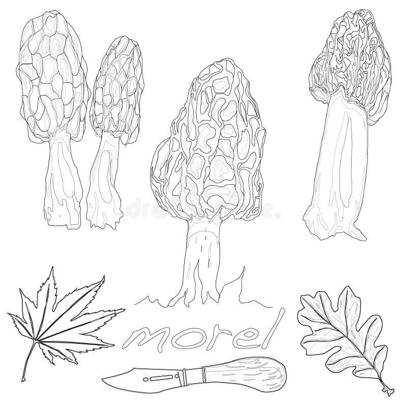 Vetor do cogumelo do Morel ilustração royalty free