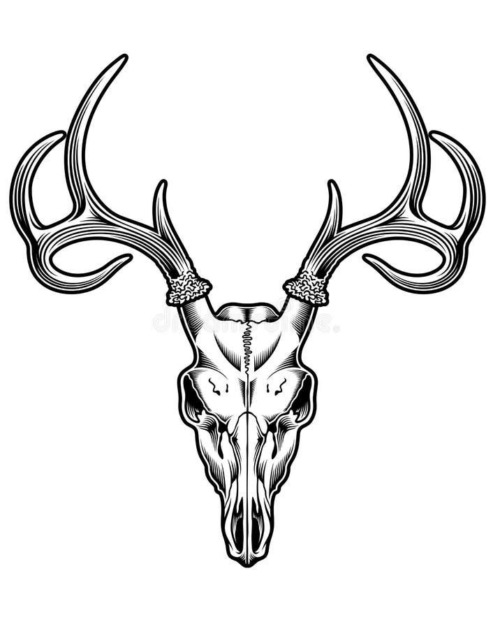 Vetor do crânio dos cervos ilustração royalty free