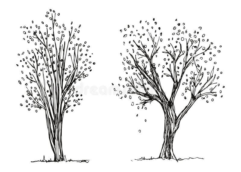 Vetor do desenho da mão do outono das árvores A folha está caindo esboço ilustração royalty free