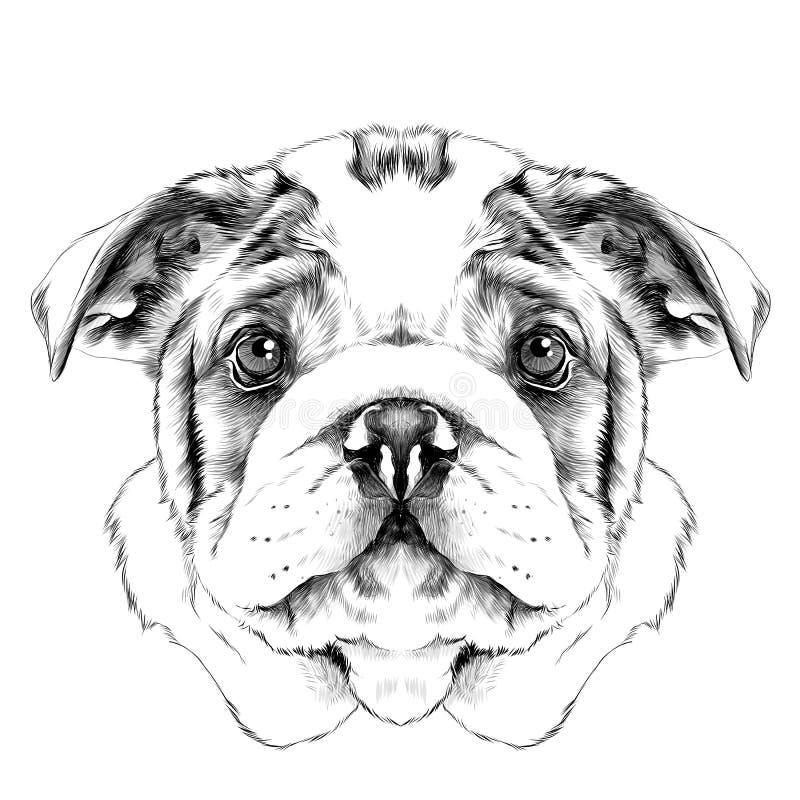 Vetor do esboço da cabeça de cão ilustração stock