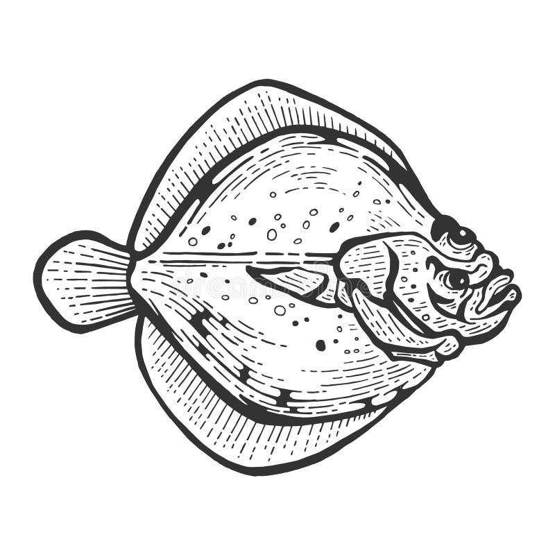 Vetor do esboço dos peixes do solha do peixe heterossomo da solha ilustração do vetor