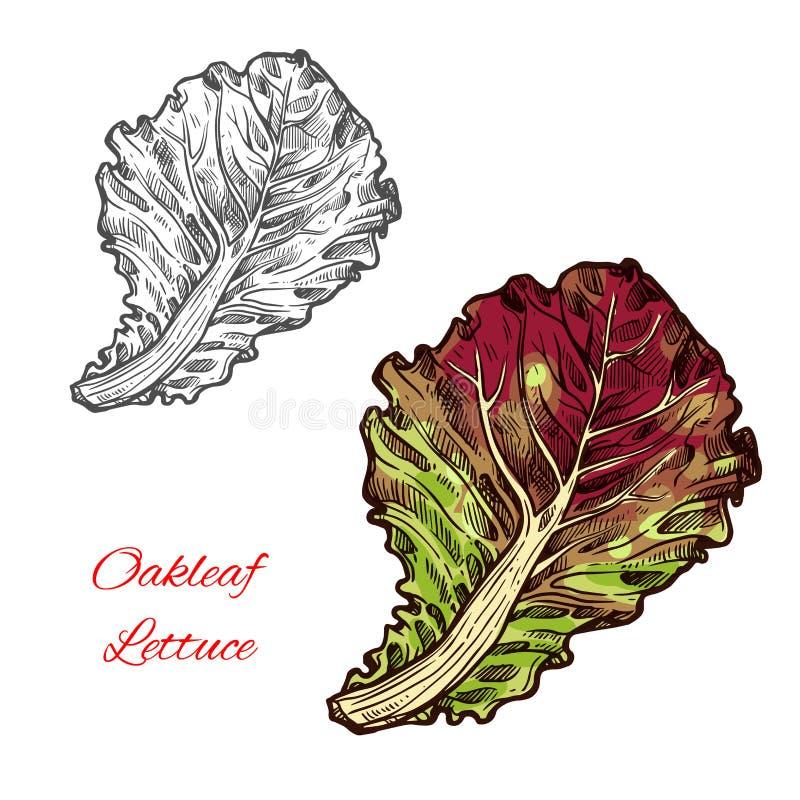 Vetor do letuce de Oakleaf ilustração royalty free