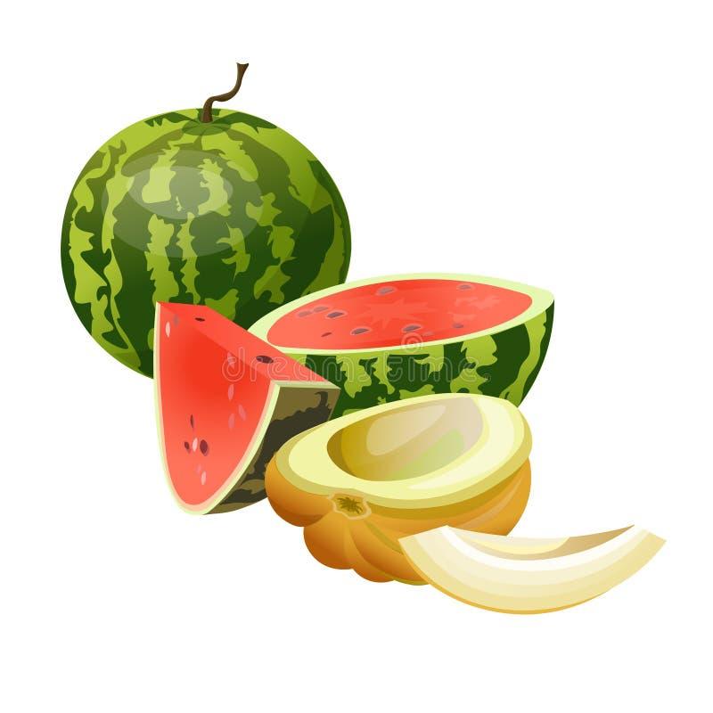 Vetor do melão e da melancia ilustração do vetor