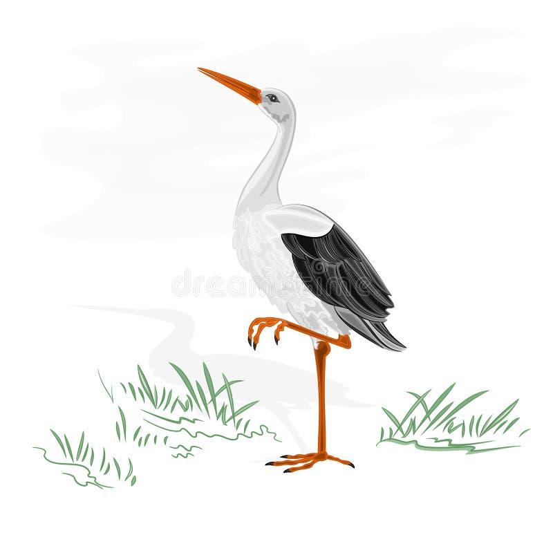 Vetor do pássaro de água da cegonha ilustração stock