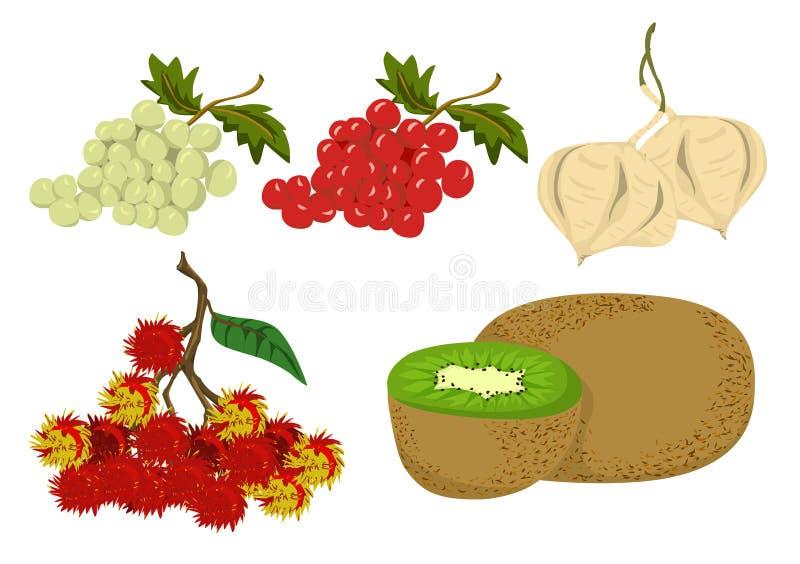 Vetor dos frutos ilustração stock