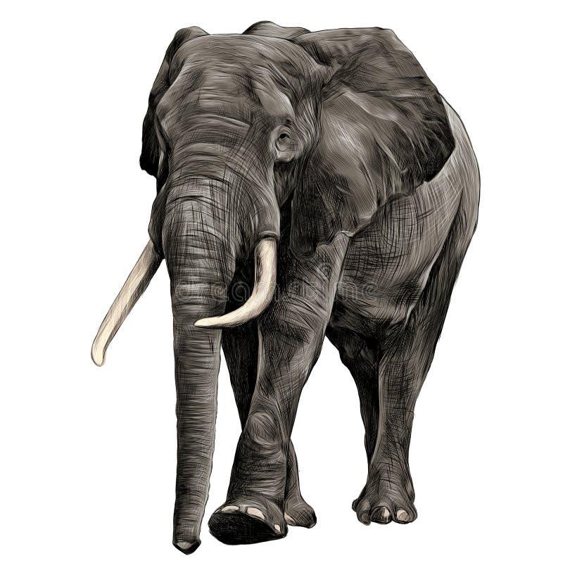 Vetor dos gráficos do esboço do elefante ilustração stock