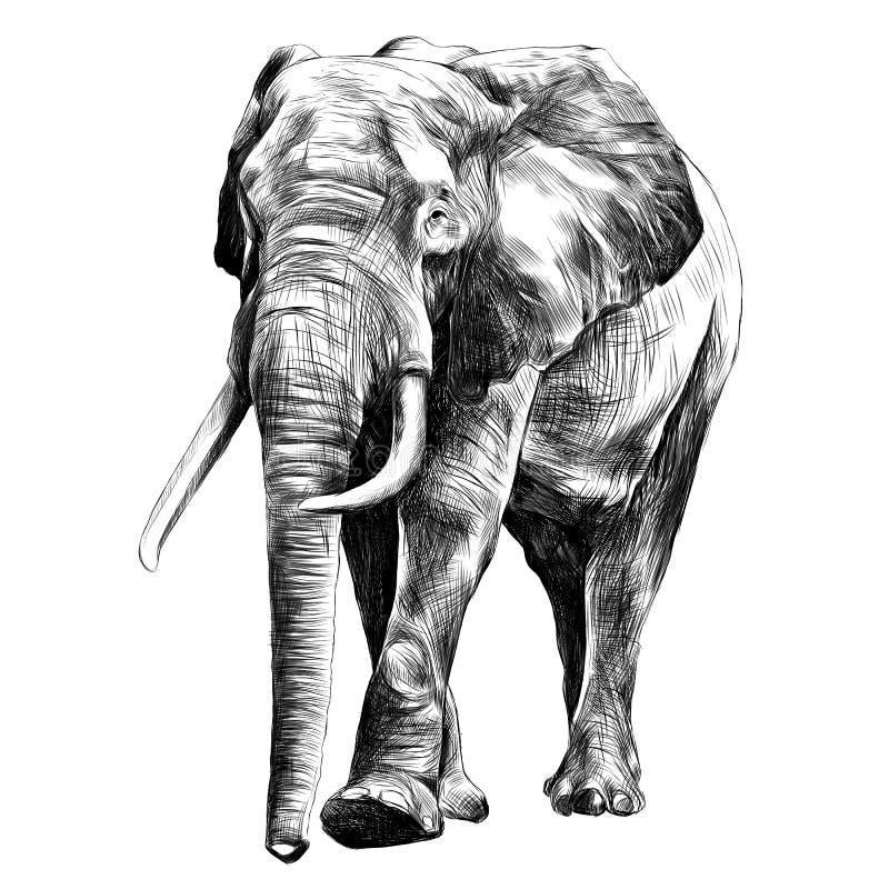 Vetor dos gráficos do esboço do elefante ilustração do vetor