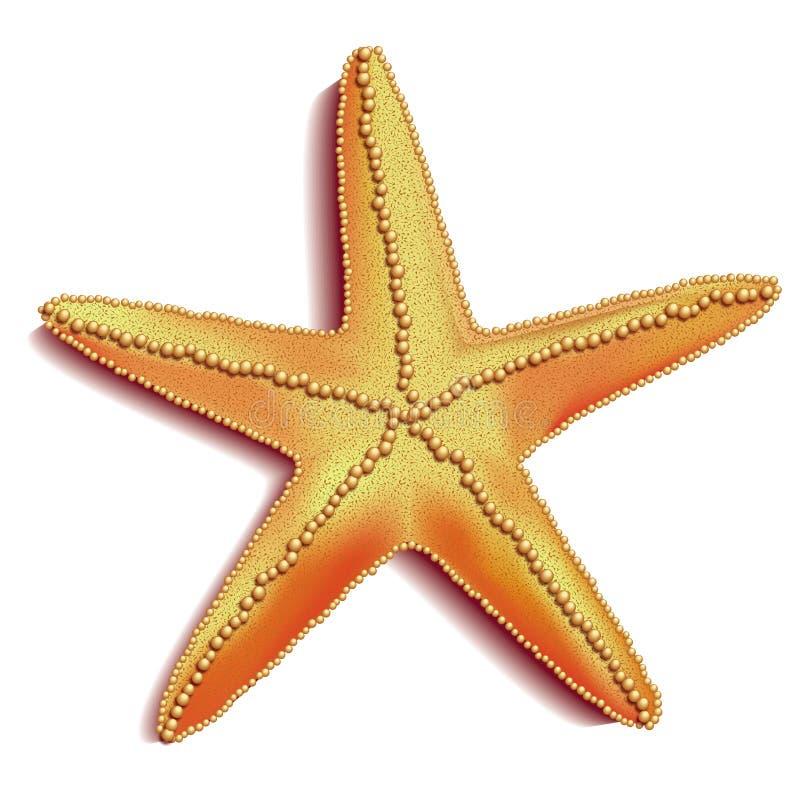 Vetor dos Starfish foto de stock royalty free