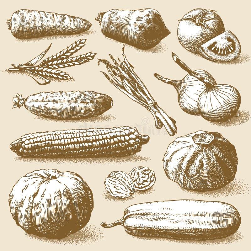 Vetor dos vegetais, dos frutos e das plantas ilustração stock