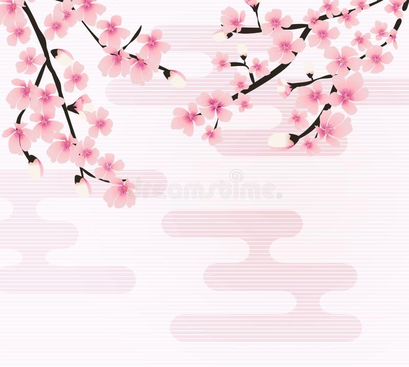 Vetor floral abstrato de Sakura Flower Japanese Natural Background ilustração royalty free
