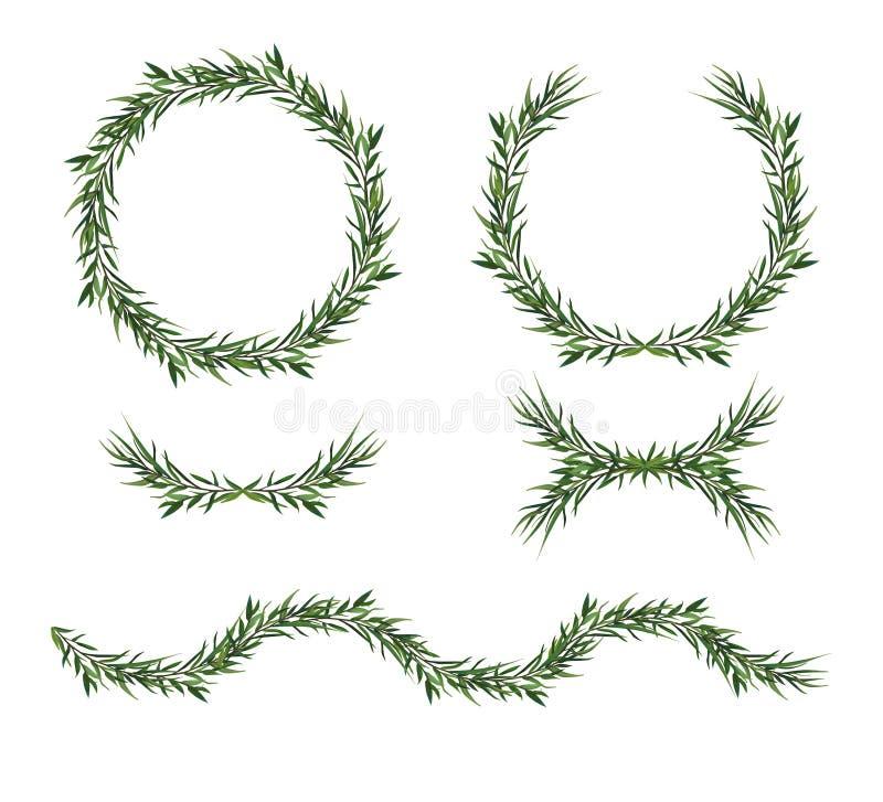 Vetor, grupo de elemento grande decorativo O verde do eucalipto deixa o roun ilustração do vetor