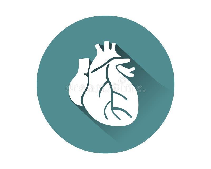 Vetor humano do ícone do coração Órgão interno humano ilustração stock