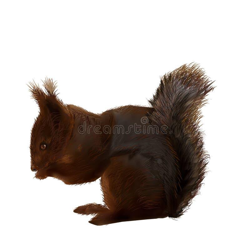 Vetor-ilustração--um-esquilo ilustração stock