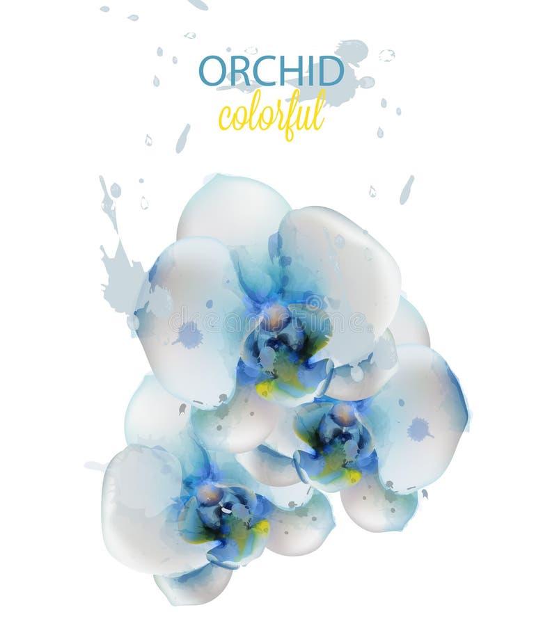 Vetor isolado aquarela das flores da orquídea azul Decorações florais delicadas ilustração do vetor