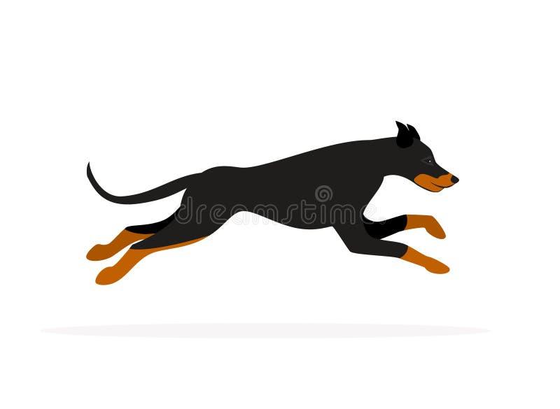 Vetor isolado corredor do cão do pinscher do Doberman ilustração do vetor