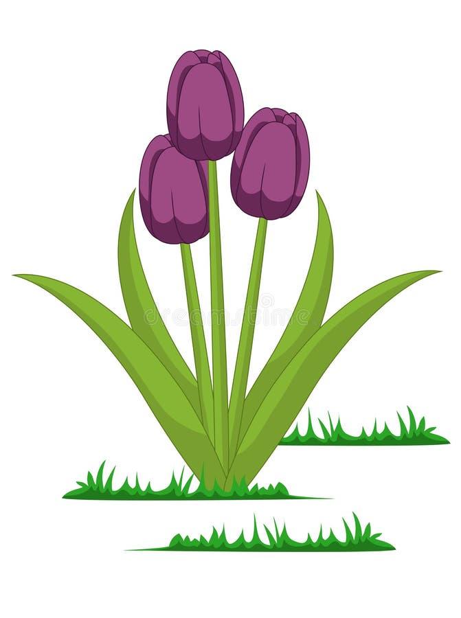 Vetor isolado das flores das tulipas ilustração do vetor
