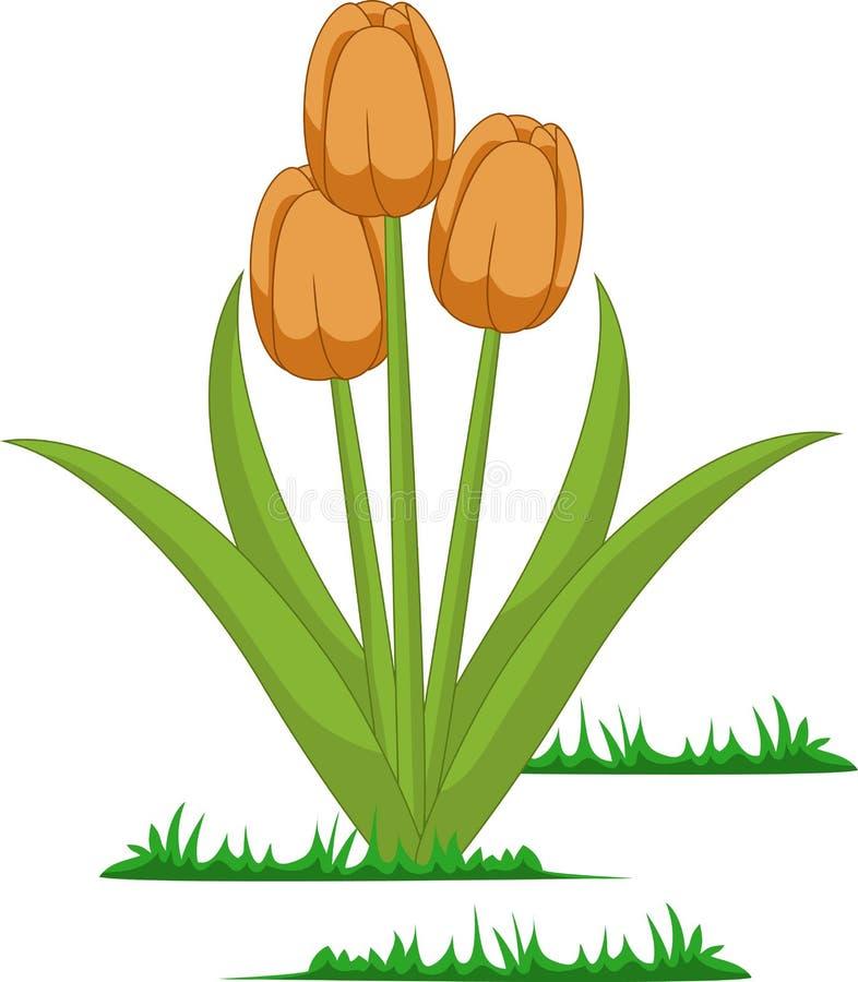 Vetor isolado das flores das tulipas ilustração royalty free