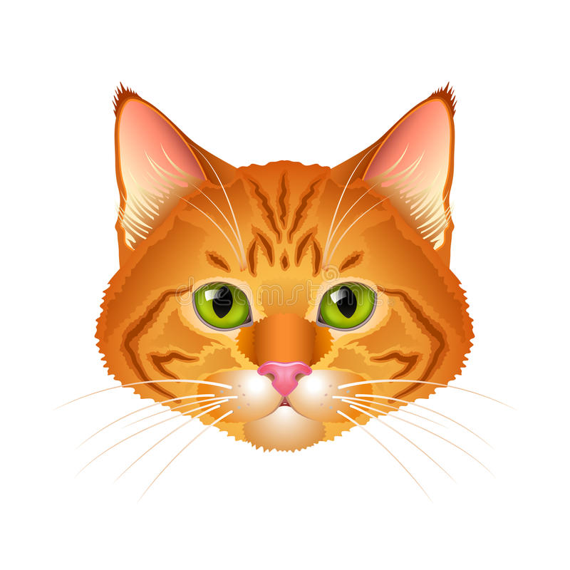 Vetor isolado do gato retrato realístico vermelho ilustração do vetor