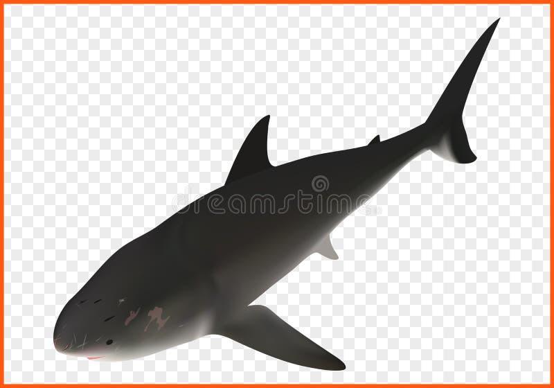 Vetor isométrico do tubarão ilustração do vetor