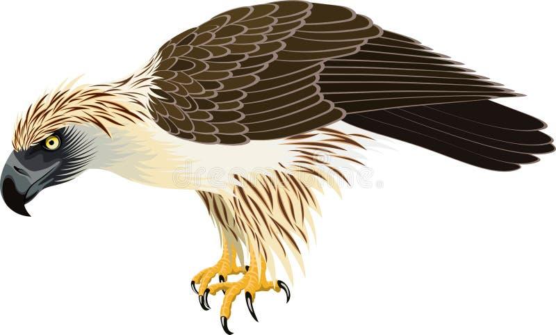 Vetor jefferyil filipino de Eagle - de Pithecophaga ilustração stock