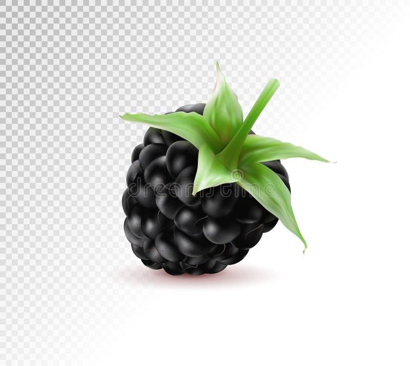 Vetor realístico da qualidade baga isolada Um fruto fresco da amora-preta com a haste isolada no fundo transparente 3d ilustração do vetor