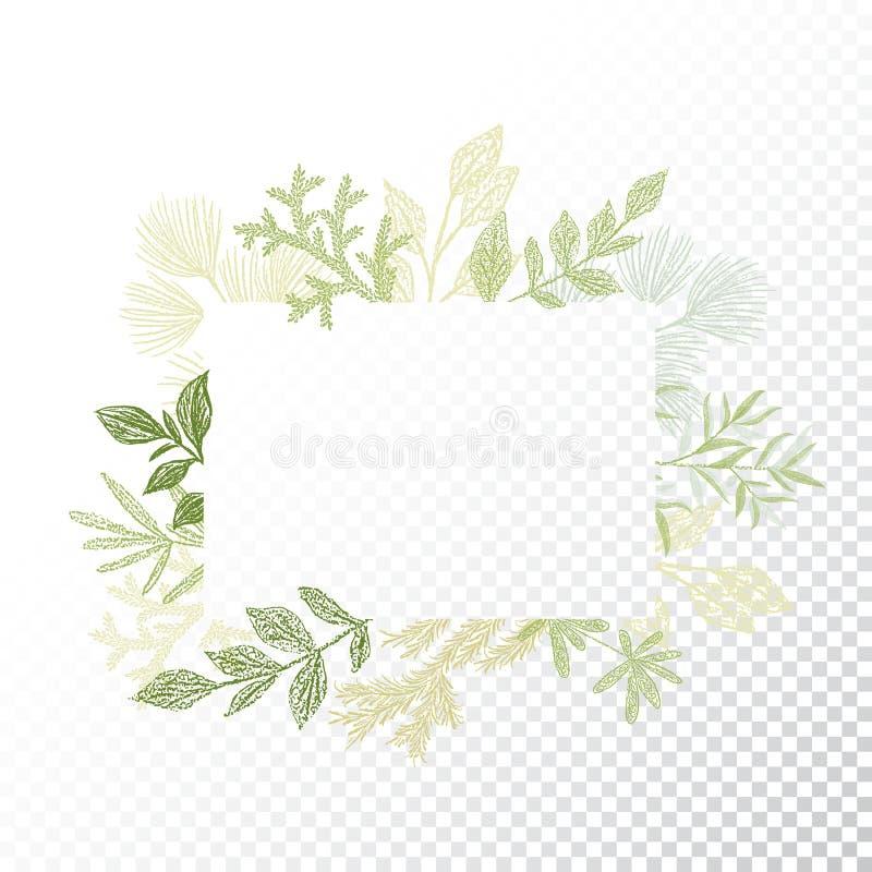 Vetor retangular do quadro, dos ramos e das folhas ilustração stock