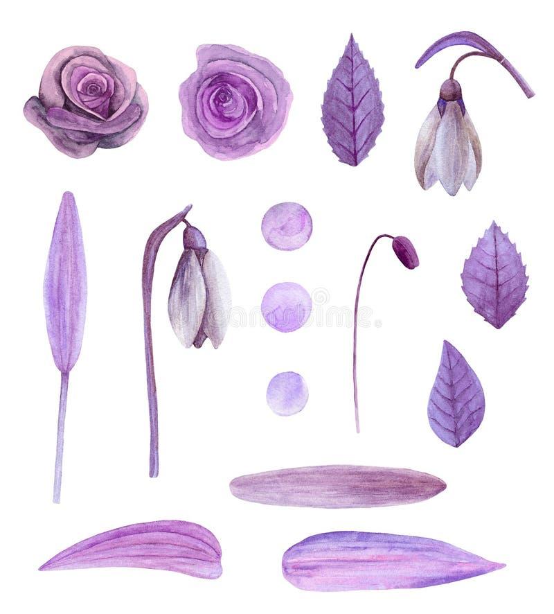 Vetor roxo das flores ilustração royalty free