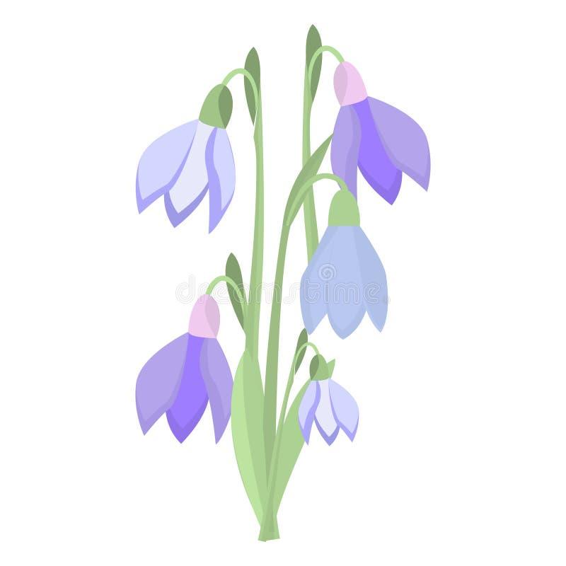 Vetor roxo das flores da beleza do açafrão da mola adiantada e da natureza dos snowdrops ilustração stock