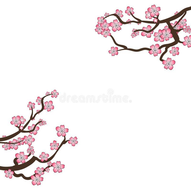 VETOR Sakura Frame, ramos de florescência isolados no fundo branco, molde do projeto da placa, Cherry Flowers ilustração do vetor