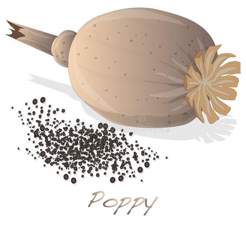 Vetor secado da cabeça da papoila ilustração stock