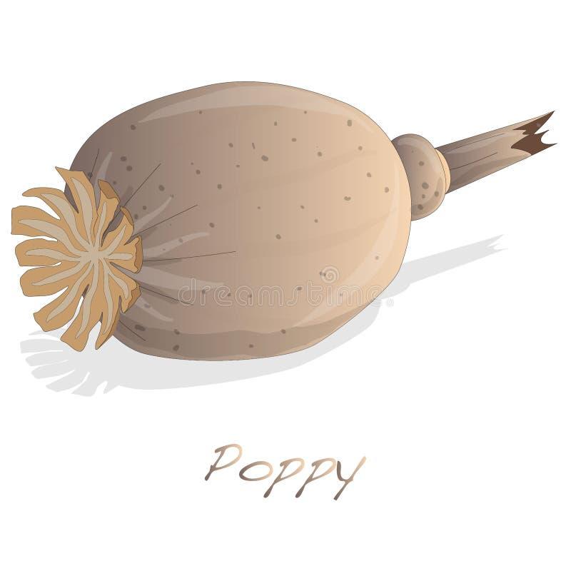 Vetor secado da cabeça da papoila ilustração royalty free