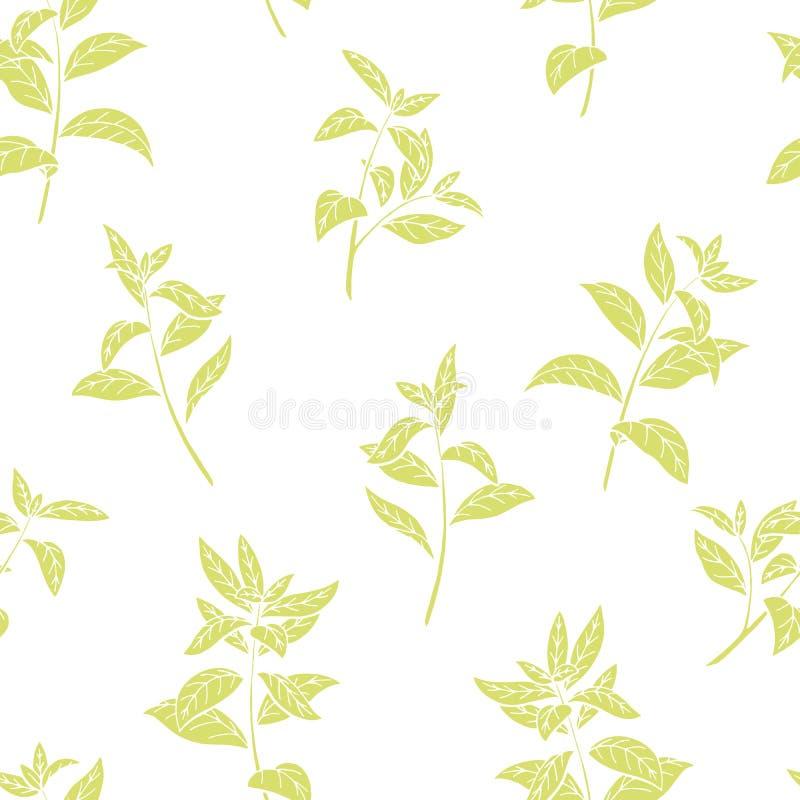 Vetor sem emenda da ilustração do esboço do fundo do teste padrão da cor gráfica da planta de chá ilustração royalty free