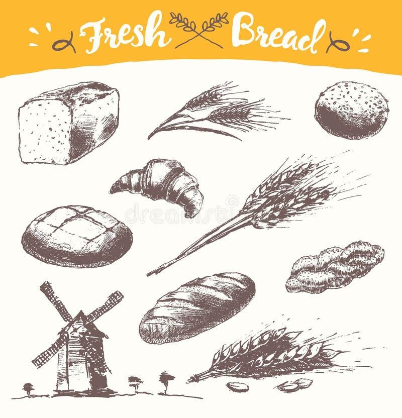 Vetor tirado ajustado do trigo da ilustração do pão fresco ilustração royalty free