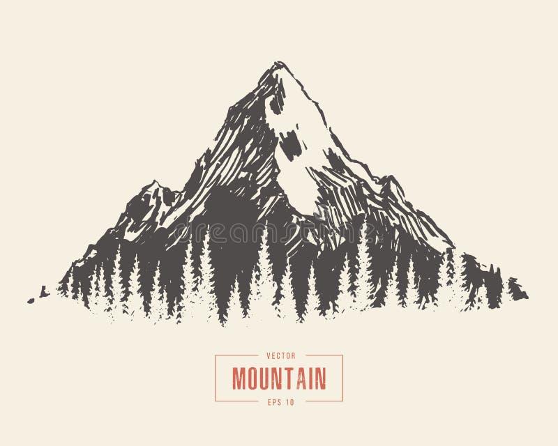 Vetor tirado mão da floresta do pinho da paisagem da montanha ilustração stock