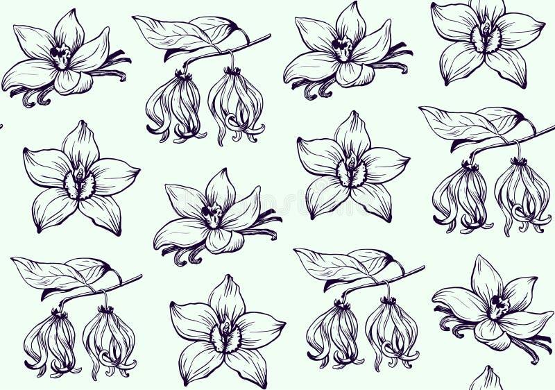 Vetor tirado mão do teste padrão de flores da tinta ilustração royalty free