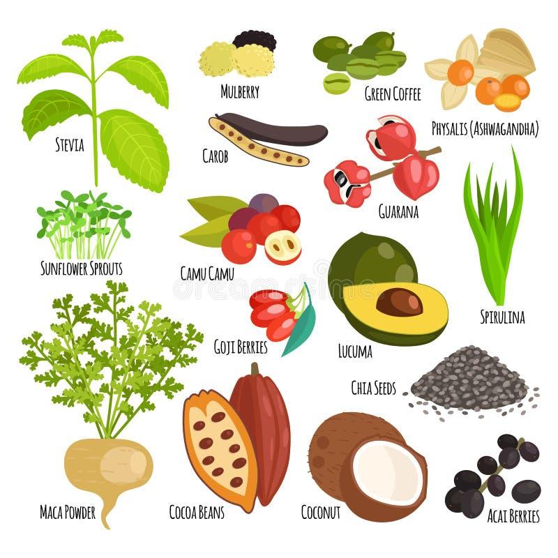 Vetor vegetal saudável do superfood do vegetariano ilustração royalty free