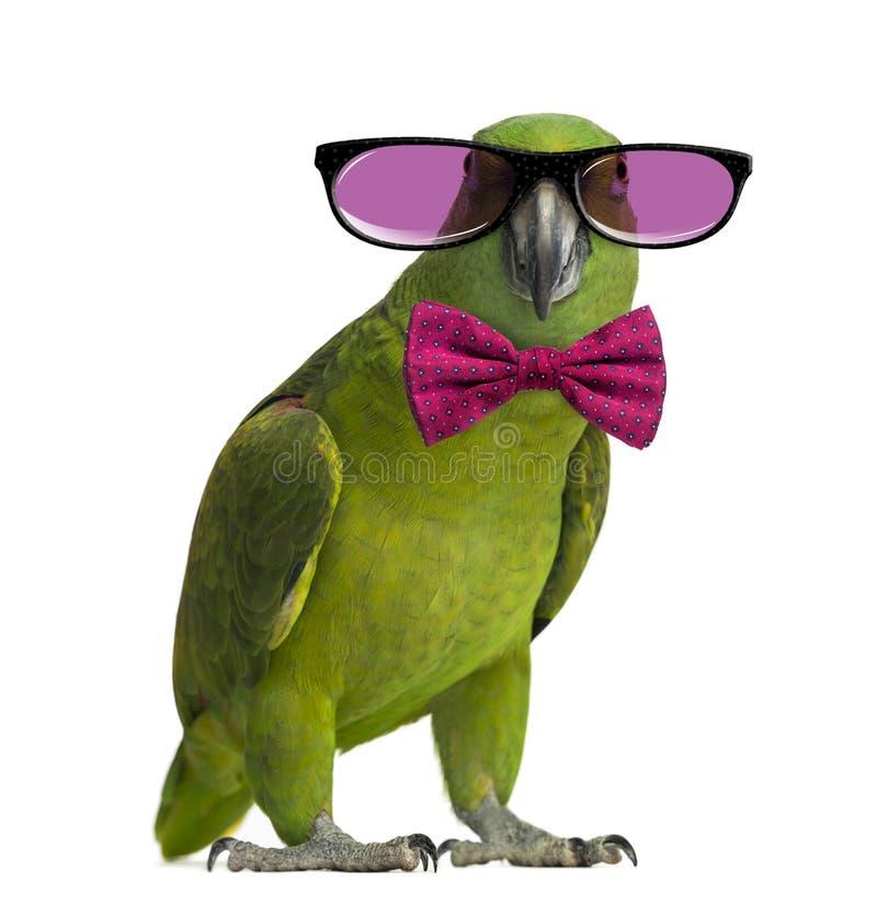Vetri d'uso del pappagallo giallo-naped e un farfallino fotografia stock libera da diritti