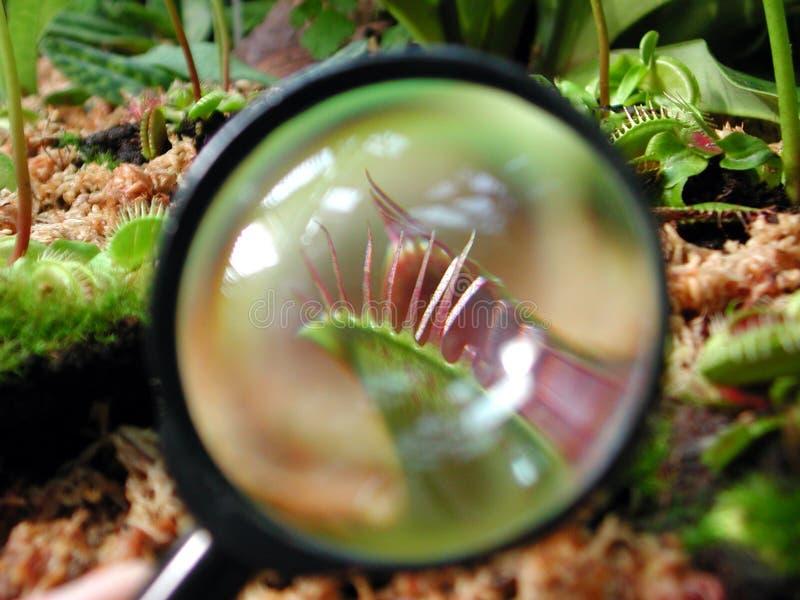Vetro del Magnifier su una pianta molto piccola immagine stock libera da diritti