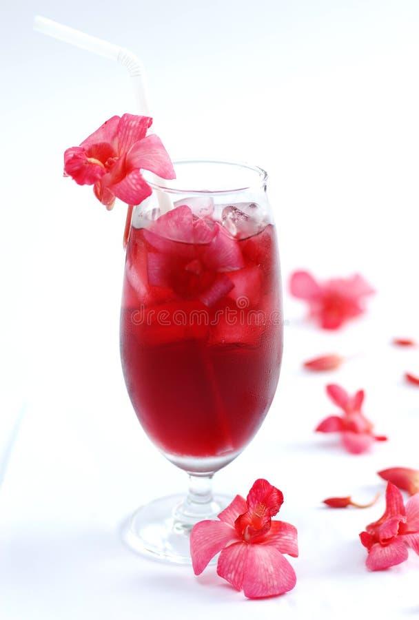 Vetro del tè fresco di orchird su fondo bianco fotografia stock libera da diritti