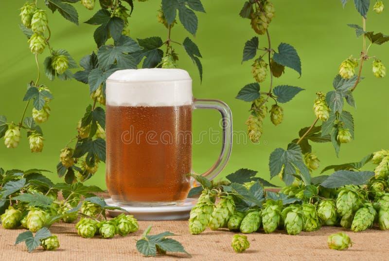 Vetro di birra con i luppoli immagini stock